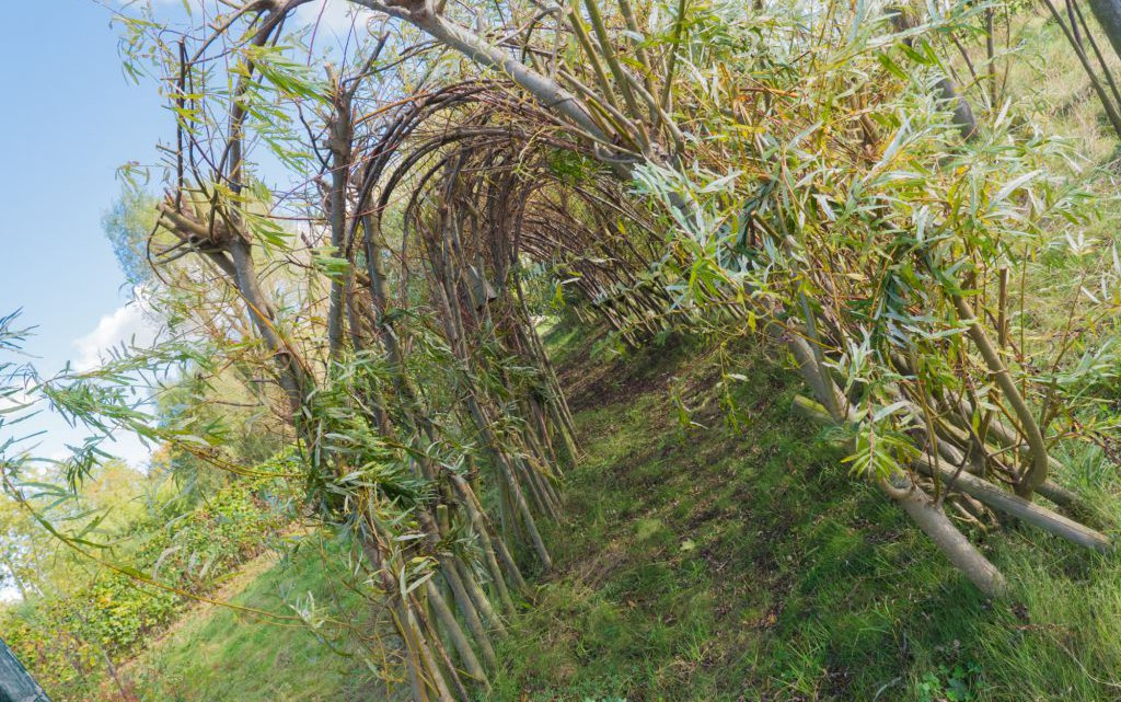 Der BUND Erlebnisgarten im Inselpark